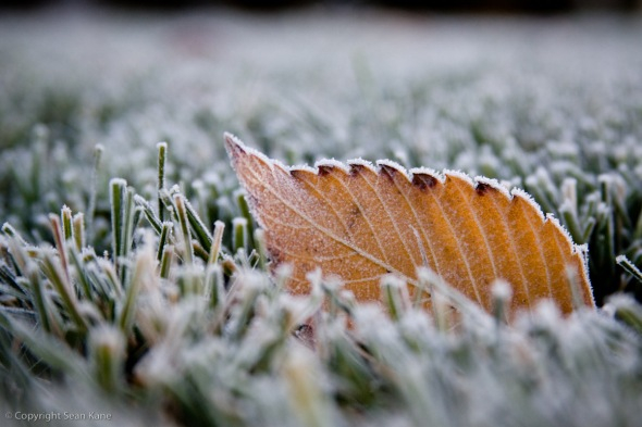 Frosty Leaf in Grass